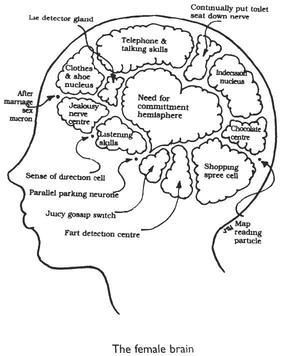 the female brain DC Wire Chart array inner workings of the female brain u2013 mirrorcracked rh mirrorcracked